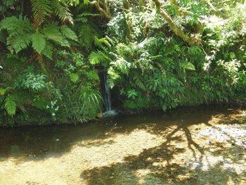 Rotorua Lodge Stream
